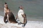 img_5834-2-pinguine