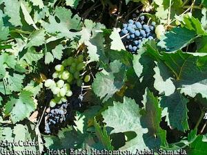 Israel - Wein - Malon Eschel Hashomron